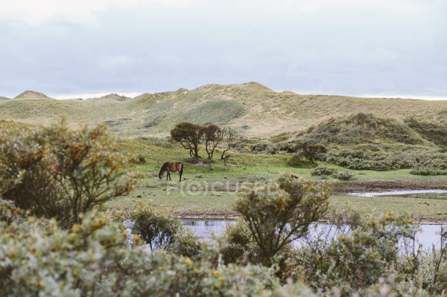 Netherlands, Bergen aan Zee, Horse grazing in green pasture by the lake, natural green landscape view — Stock Photo