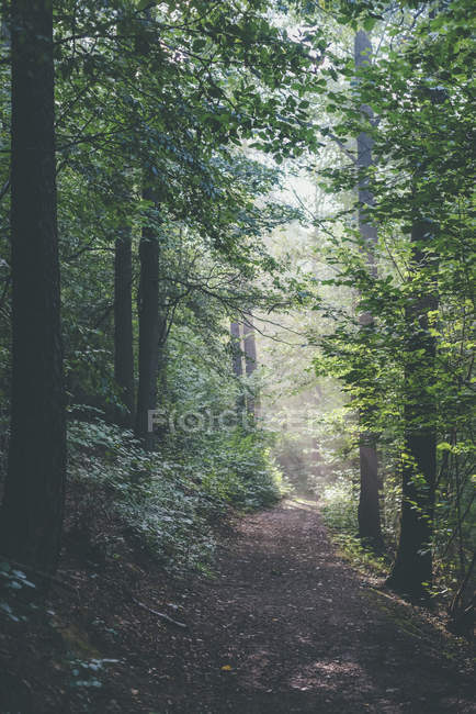 Germany, Saxony, trail in forest  during daytime — Stock Photo