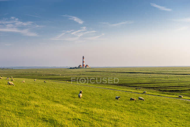 View of rolling landscape with sheep and tower on background — Stock Photo