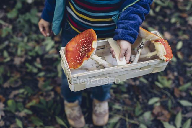 Boy holding basket with fly agarics — Stock Photo