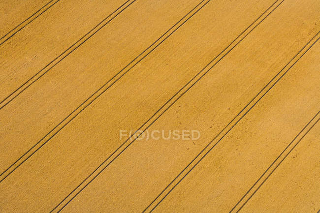 Vista aérea de Campo con orugas tractor, Baviera, Alemania - foto de stock