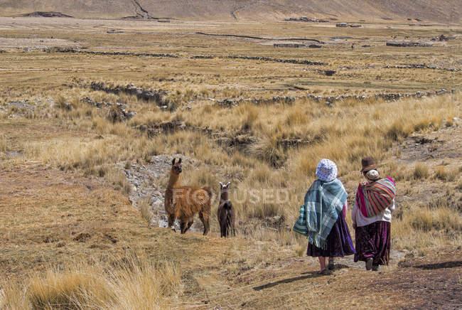 Bolivia, La Paz district, Altiplano, Two aymara women walking trough the Bolivian Plateau with two llamas — Stock Photo