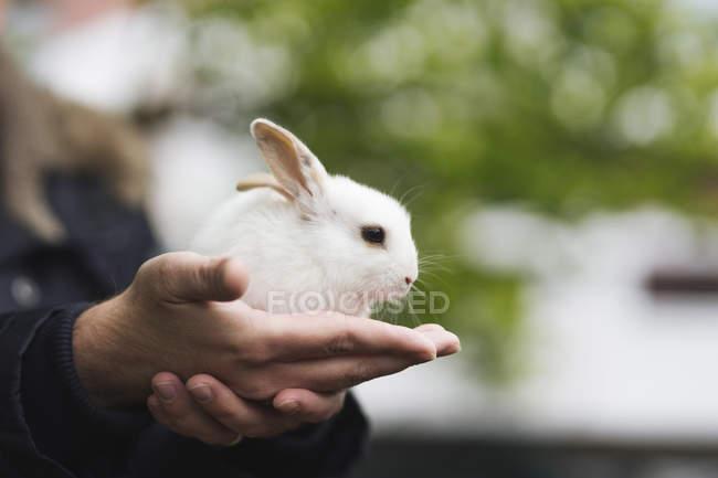 Мало заєць, сидячи на чоловічої руки проти розмитість фону — стокове фото