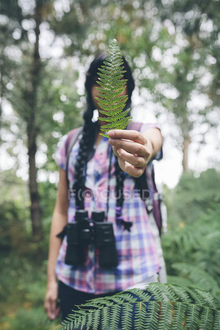 Woman's hand holding leaf of fern — Stock Photo