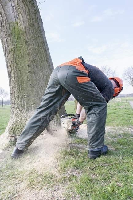 Lenhador derrubando árvore, visão traseira — Fotografia de Stock
