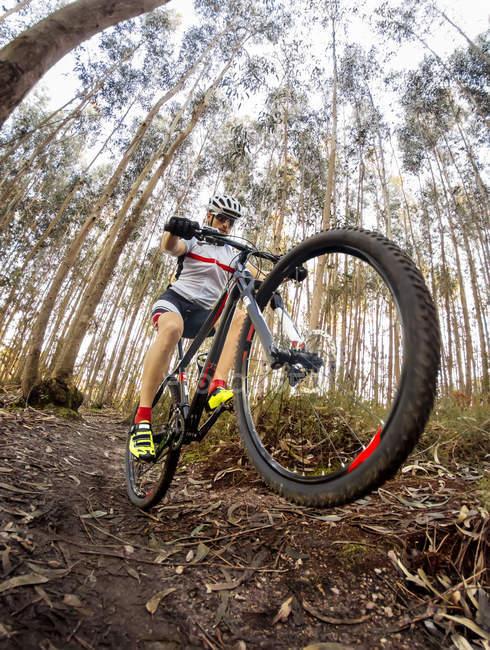Ciclista de montaña conduciendo en el bosque - foto de stock