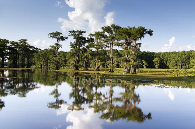 EUA, Texas, Caddo Lake State Park durante o dia — Fotografia de Stock