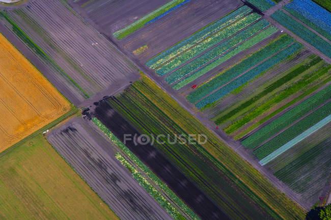 Veduta aerea di campi agricoli colorati di giorno, Baviera, Germania — Foto stock