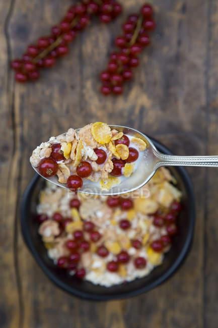 Йогурт, кукурузные хлопья и красной смородины в ложку и чашку — стоковое фото