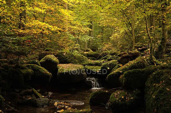 Монбах Долина осенью в дневное время — стоковое фото