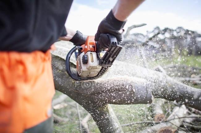 Lumberjack sawing tree trunk closeup view — Stock Photo