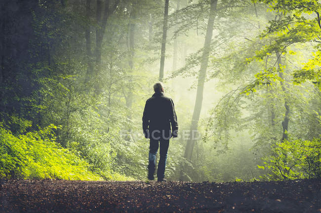 Man walking on forest track in morning light — Stock Photo