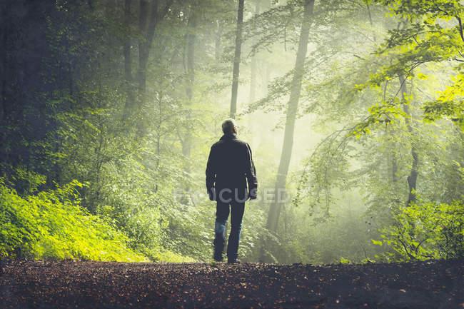 Человек идет по лесной тропе при утреннем свете — стоковое фото