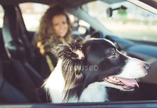 Frau Auto zu fahren, Hund auf dem Beifahrersitz sitzen — Stockfoto
