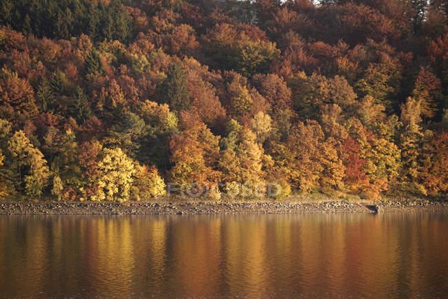 Германия, Langscheid, вид осенних деревьев на берегу озера плотины Sorpe — стоковое фото