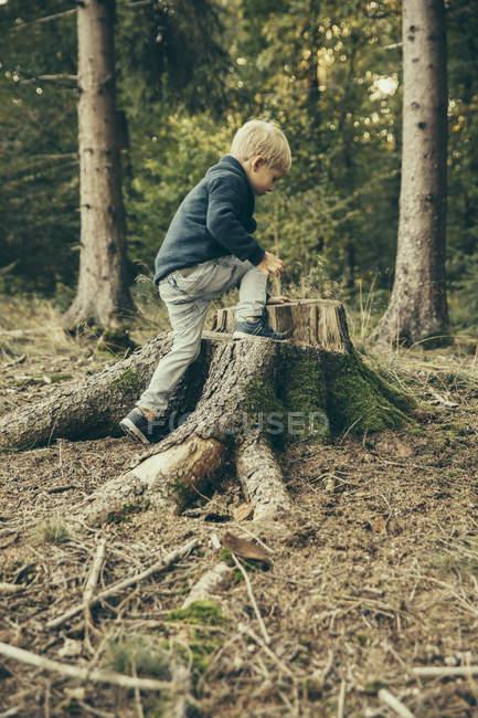 Мальчик залезает на пень елочки — стоковое фото