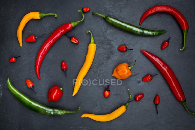Pimentos diferentes na ardósia — Fotografia de Stock