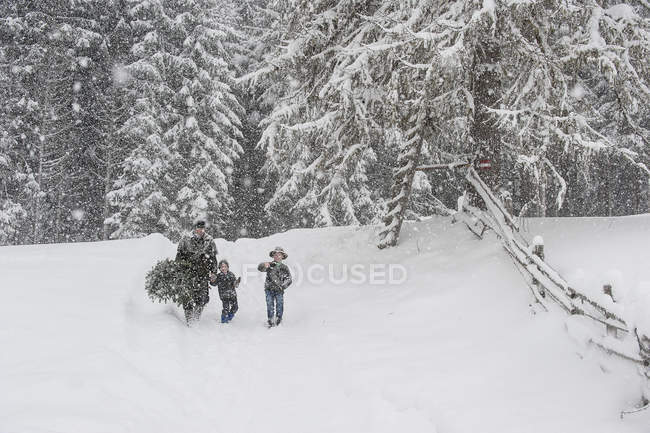 Австрия, Альтенмаркт-Цаухензее, отец двух сыновей, перевозящих Рождественская елка в зимний пейзаж — стоковое фото