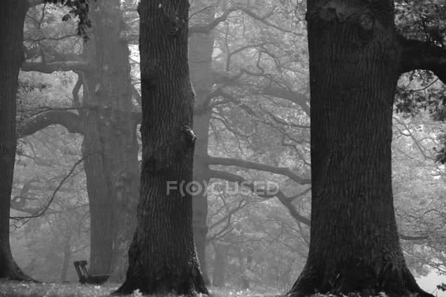 Floresta em novembro, banco, imagem em preto e branco — Fotografia de Stock