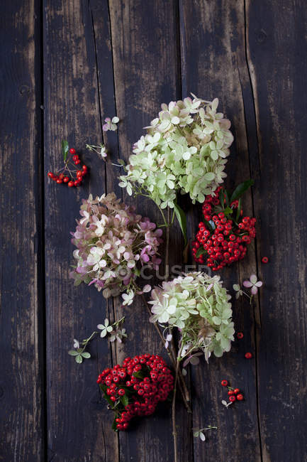 Blossoms of Hydrangea and firethorn on dark wood — Stock Photo