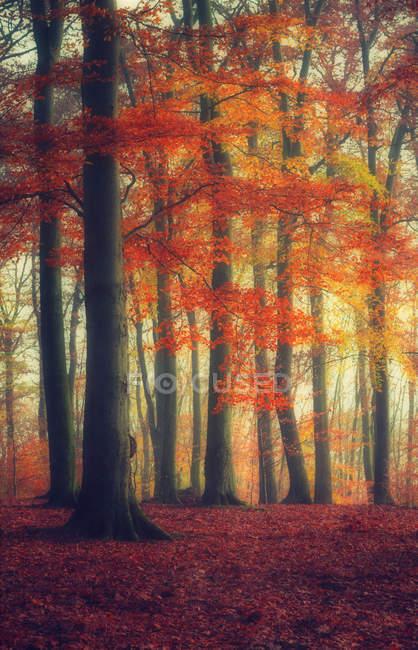 Осенний лес с красными цветами — стоковое фото