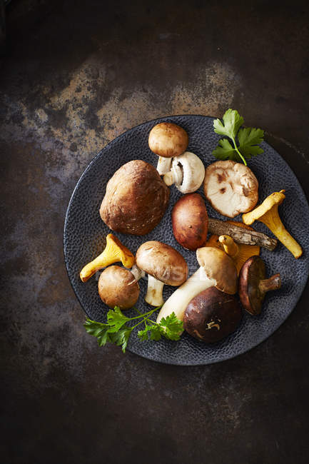 Plate of different mushrooms — Stock Photo