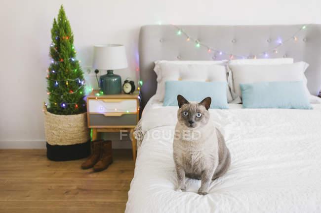 Кота, сидящего на кровати во время Рождества — стоковое фото