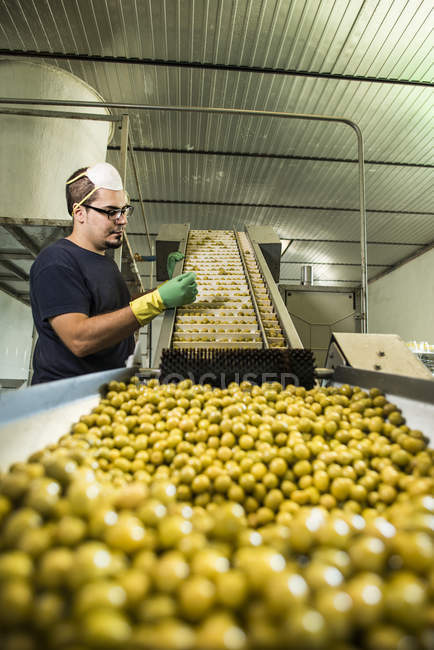 Worker in food processing plant at conveyor belt with olives — Stock Photo