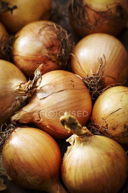 Fresh organic onions — Stock Photo