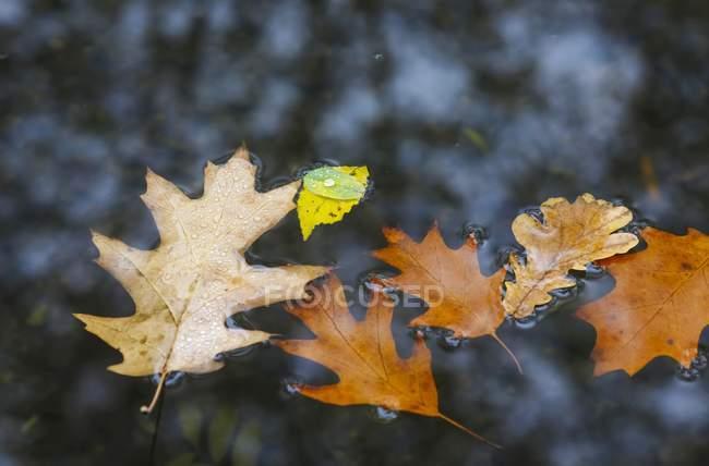 Осенние листья в воде лужа — стоковое фото