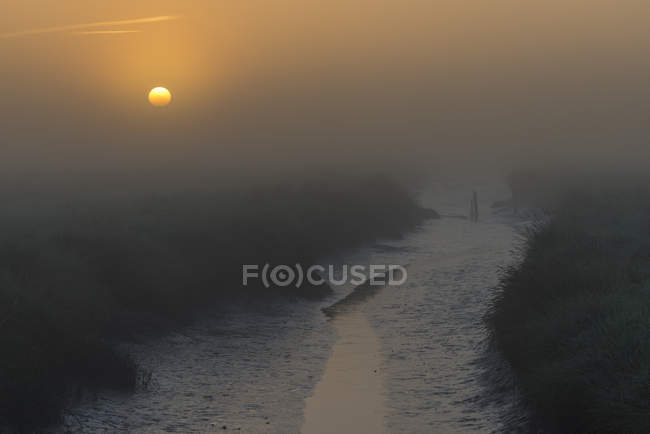 Misty salt marsh at sunset — Stock Photo