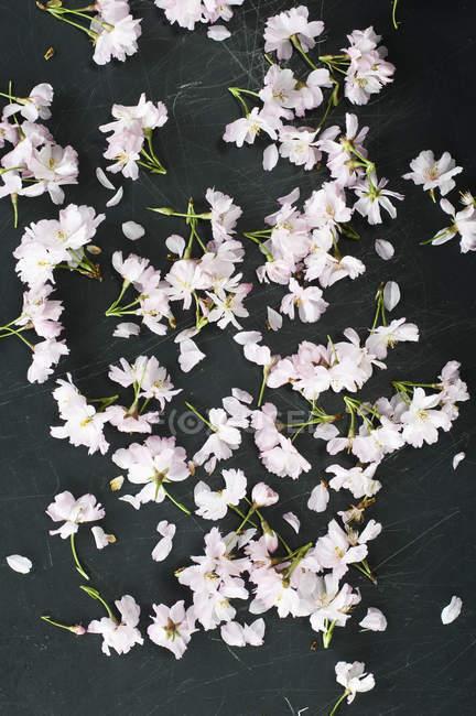 Fleurs de cerisier foncé motif — Photo de stock