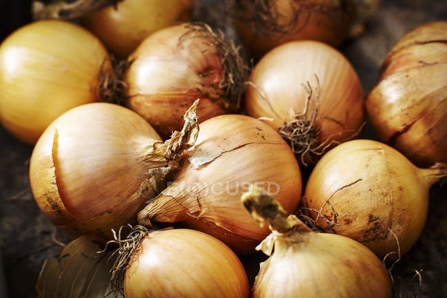 Органический Лук свежий — стоковое фото