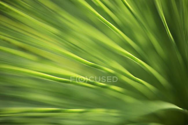 Травяное дерево, макро — стоковое фото