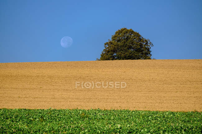 Germany, Upper Bavaria, field and moon  during daytime — Stock Photo