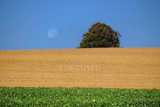 Deutschland, Oberbayern, Feld und Mond tagsüber — Stockfoto