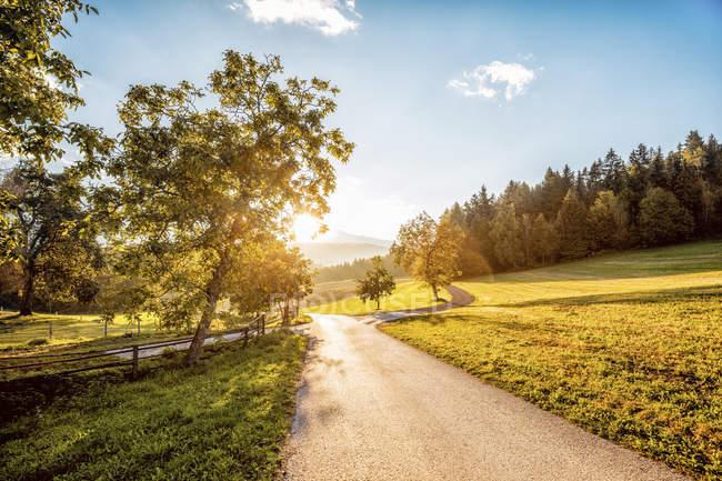 Австрия, Каринтия, Лудманнсдорф, дорога, Лес осенью, против солнца — стоковое фото