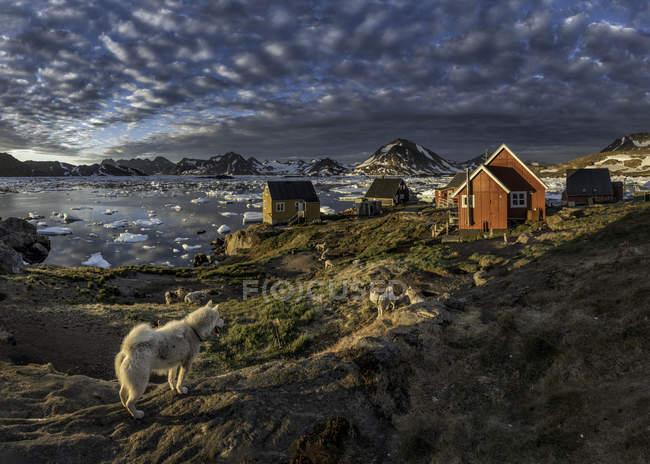 Groenlândia, Schweizerland, Kulusuk, casas e cães contra água — Fotografia de Stock