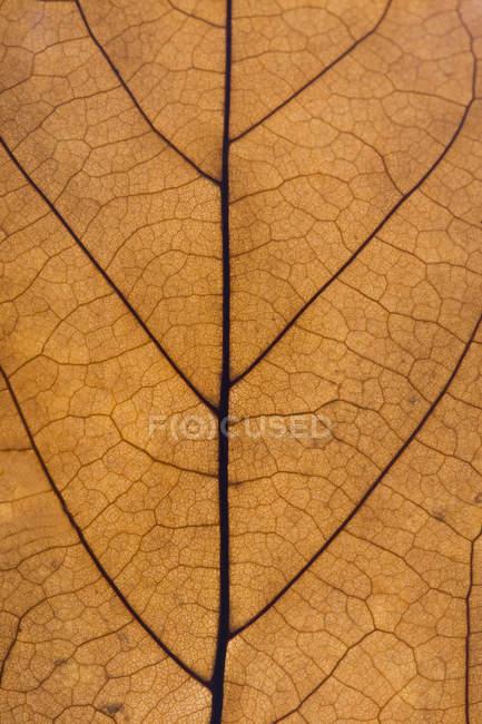 Коричневый лист, закрыть — стоковое фото