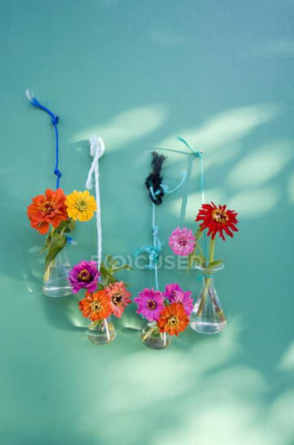 Vidrio de laboratorio con zinnia común fijado con cordones colgando en una pared - foto de stock