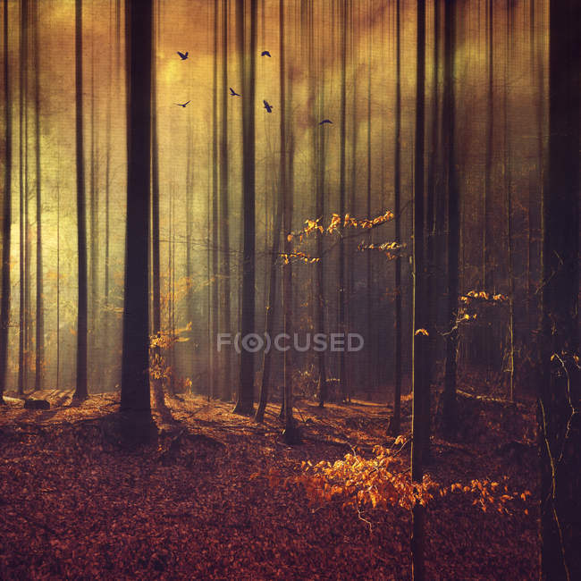 Germany, Remscheid, abstract forest scenery — Stock Photo