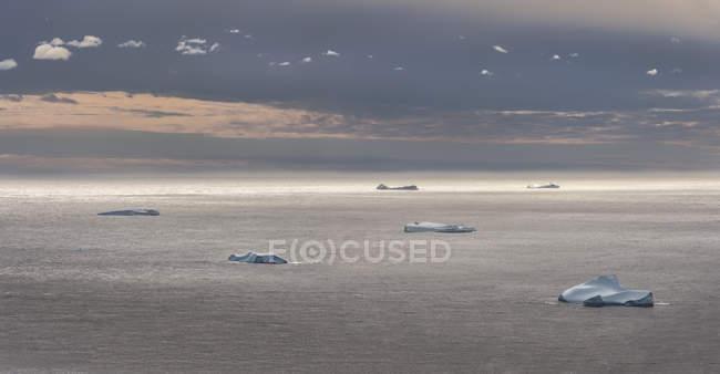 Groenlândia, Schwei=, Kulusuk, flutua na superfície da água — Fotografia de Stock