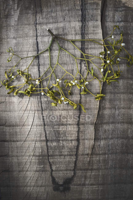 Branche de gui sur une surface en bois sombre — Photo de stock