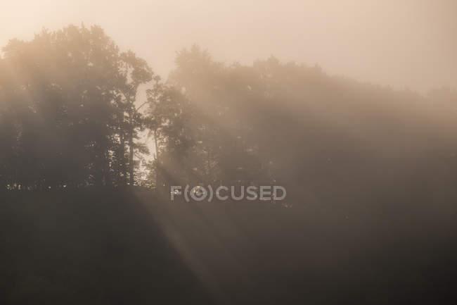 Niebla sobre árboles en el bosque por la mañana - foto de stock