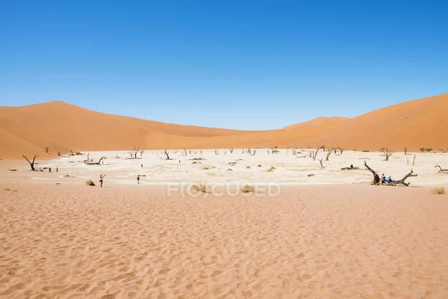 Arbres morts de Namibie, désert du Namib, en Deadvlei — Photo de stock