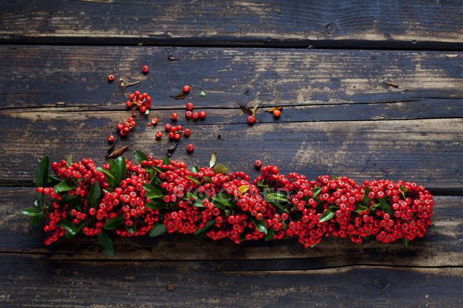 Firethorn berries with leaves on dark wood — Stock Photo