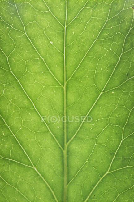 Green leaf, close up — Stock Photo