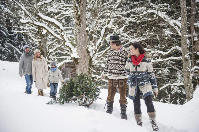 Две пары и двое детей перевозят рождественскую елку в зимнем лесу — стоковое фото
