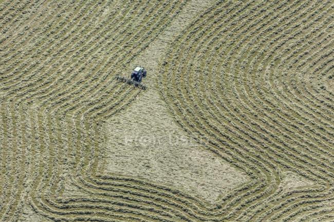 Faneuse foin sur le champ de foin — Photo de stock