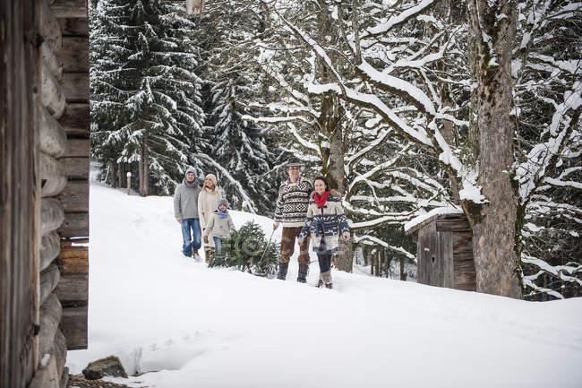 Dos parejas y dos niños transportando el árbol de Navidad en el bosque de invierno - foto de stock